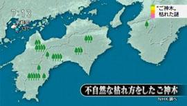 """狙われる""""ご神木""""6"""