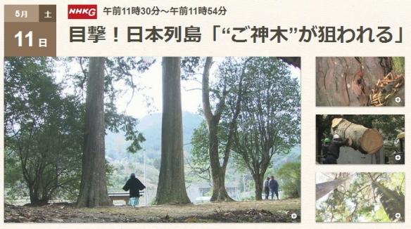 """目撃!日本列島「""""ご神木""""が狙われる」(NHK 2013-5-11)"""