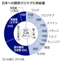 クロマグロ、養殖も総量規制2