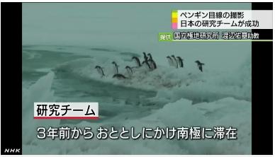 ペンギン目線カメラで生態解明2
