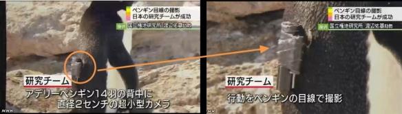 ペンギン目線カメラで生態解明3