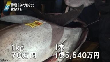キロ70万円、1本1億5540万円で落札されたマグロ