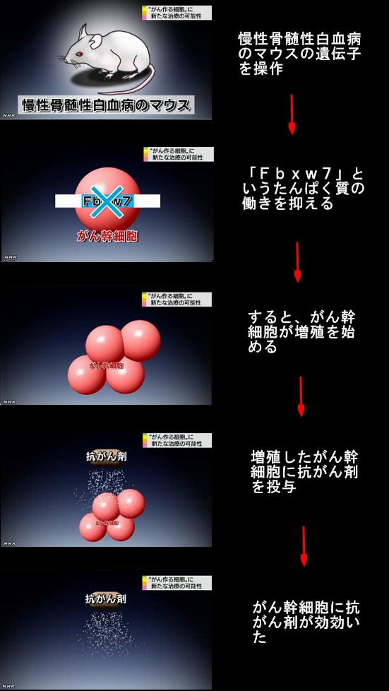 がん幹細胞⇒新治療の可能性2