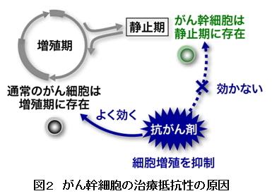 がん幹細胞⇒新治療の可能性8_図2
