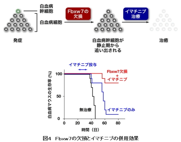 がん幹細胞⇒新治療の可能性8_図4