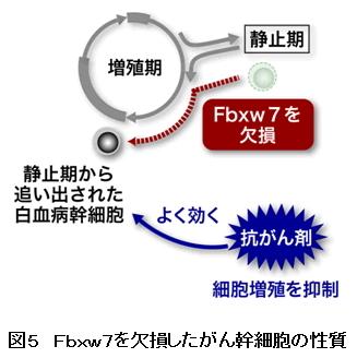 がん幹細胞⇒新治療の可能性8_図5