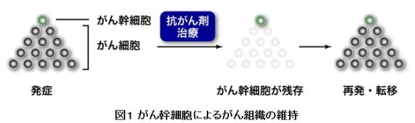 がん幹細胞⇒新治療の可能性8_図1