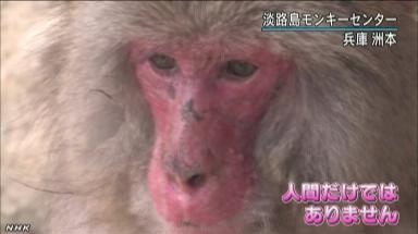 花粉症に苦しむニホンザル2