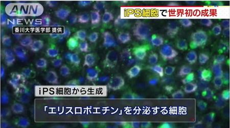 世界初「赤血球増やす細胞」生成成功2