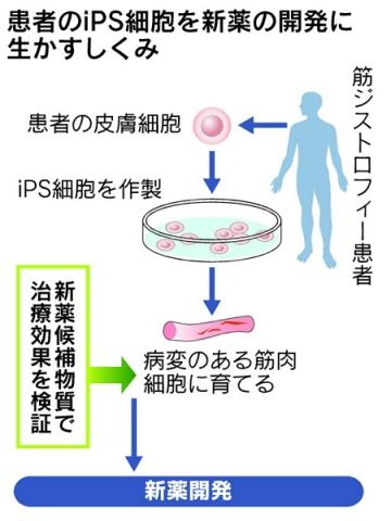 筋ジストロフィー患者からiPS細胞6