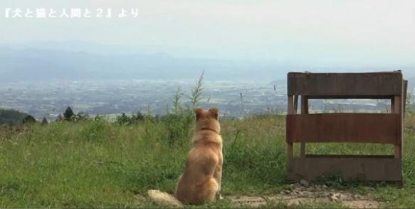 動物たちの大震災1