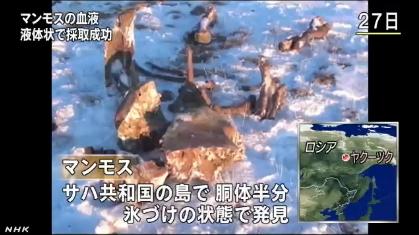 マンモスから血液採取に成功(NHK13-5-31)1