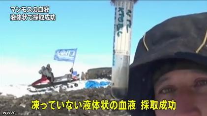 マンモスから血液採取に成功(NHK13-5-31)4