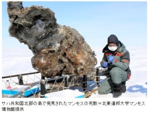 ロシアのマンモス死骸から血液採取(朝日13-5-30)2