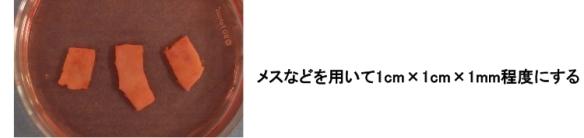 卵巣組織凍結01