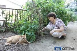 原発と、猫の「福ちゃん」の物語5