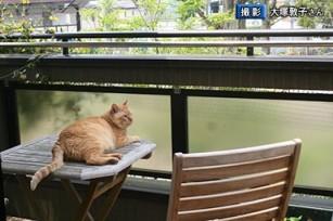原発と、猫の「福ちゃん」の物語6