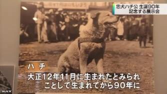 「ハチ公」展_NHKニュース_キャプチャ1