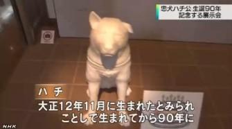 「ハチ公」展_NHKニュース_キャプチャ2