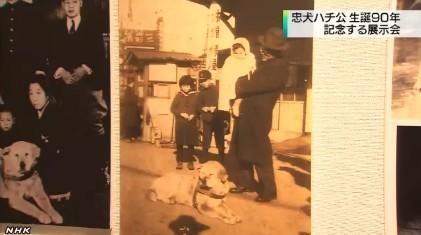 「ハチ公」展_NHKニュース_キャプチャ5