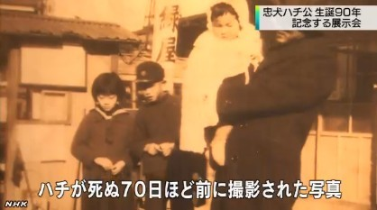 「ハチ公」展_NHKニュース_キャプチャ6