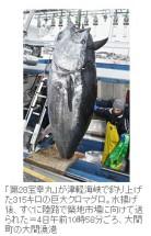 「大間でマグロ初漁、315キロ大物も」(東奥日報2014年1月4日)2