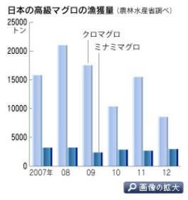 初競り大幅安、それでもマグロは築地を目指す(日経2014-1-5)グラフ1-1