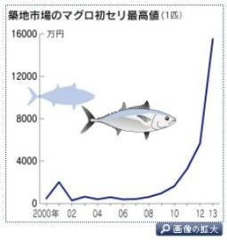 昨年1億5千万円 狂騒のマグロ初セリ、今年は… (日経2014-1-2)画像2-1