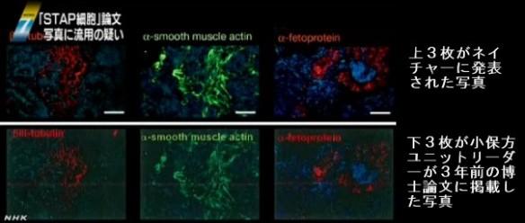 STAP細胞、写真流用の疑いで理研が調査開始