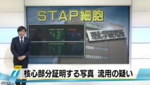STAP細胞、写真流用の疑いで理研が調査開始_NHK2014-3-11_画像1