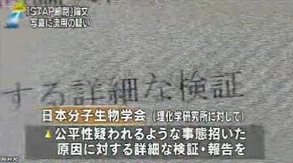 STAP細胞、写真流用の疑いで理研が調査開始_NHK2014-3-11_画像10