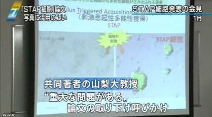 STAP細胞、写真流用の疑いで理研が調査開始_NHK2014-3-11_画像2
