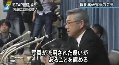 STAP細胞、写真流用の疑いで理研が調査開始_NHK2014-3-11_画像4