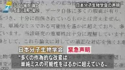 STAP細胞、写真流用の疑いで理研が調査開始_NHK2014-3-11_画像8
