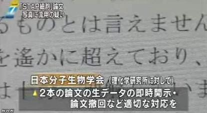 STAP細胞、写真流用の疑いで理研が調査開始_NHK2014-3-11_画像9