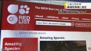 ニホンウナギ 絶滅危惧種に指定_NHKニュース6月12日_2