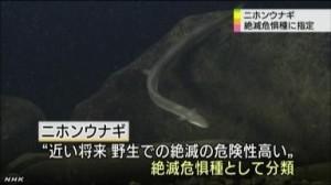 ニホンウナギ 絶滅危惧種に指定_NHKニュース6月12日_3