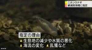 ニホンウナギ 絶滅危惧種に指定_NHKニュース6月12日_4