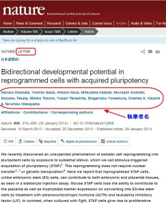 ネイチャー(Nature)で小保方・STAP細胞論文を検索する_3