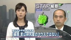 分析結果、STAPの存在否定<若山教授・記者会見>NHKニュース2014年6月16日_画像01