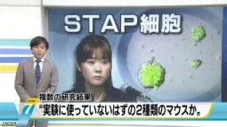 STAP 存在に新たな疑念(NHKニュース2014年6月3日)_画像01
