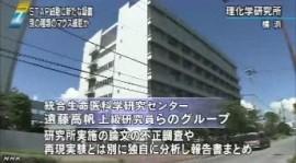 STAP 存在に新たな疑念(NHKニュース2014年6月3日)_画像03