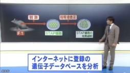 STAP 存在に新たな疑念(NHKニュース2014年6月3日)_画像04