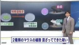 STAP 存在に新たな疑念(NHKニュース2014年6月3日)_画像05
