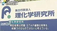 STAP 存在に新たな疑念(NHKニュース2014年6月3日)_画像10