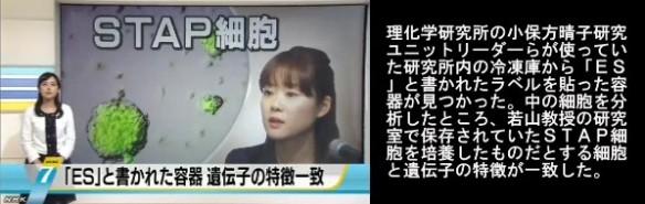 STAP問題 冷凍庫に「ES」容器_NHKニュース6月16日_画像01