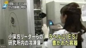 STAP問題 冷凍庫に「ES」容器_NHKニュース6月16日_画像02