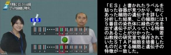STAP問題 冷凍庫に「ES」容器_NHKニュース6月16日_画像04