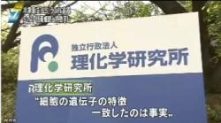 STAP問題 冷凍庫に「ES」容器_NHKニュース6月16日_画像05