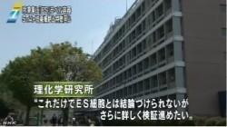 STAP問題 冷凍庫に「ES」容器_NHKニュース6月16日_画像06